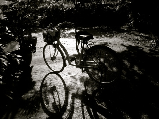 bike basks in the damp sun rays