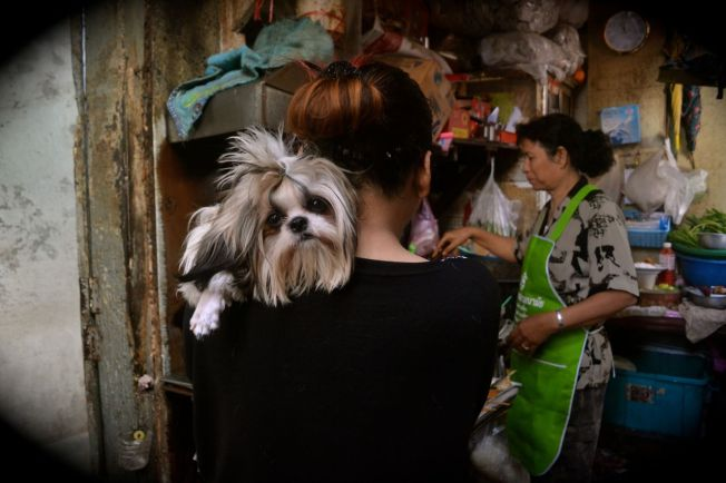 Pausing in an alley in Bangkok's Chinatown