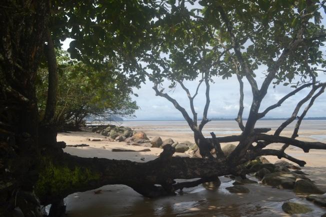 Borneo 6