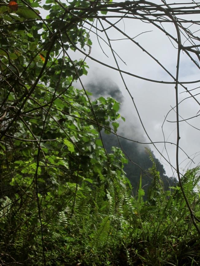 Borneo 8