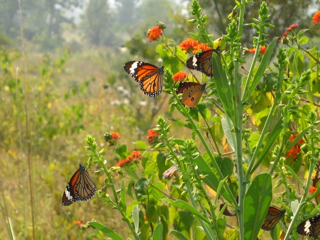 A gathering of butterflies