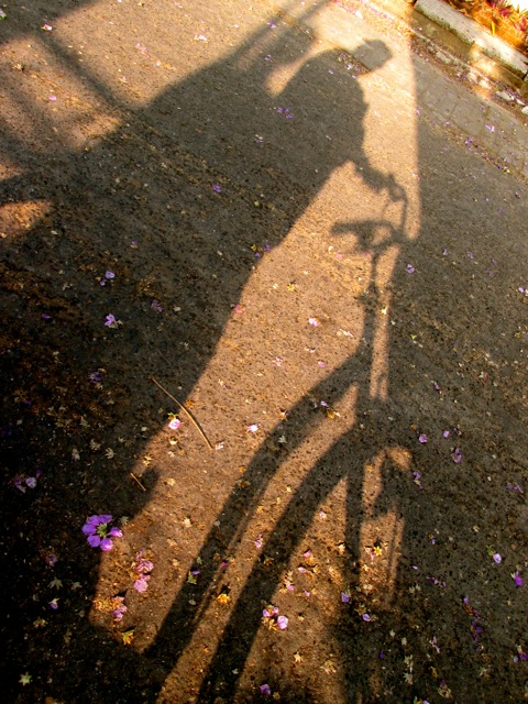 Shadow selfie and fallen Jacaranda blossom