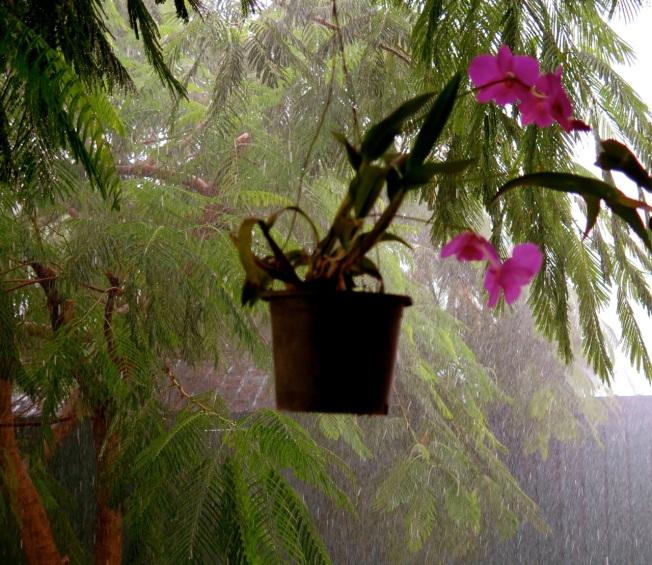 last rains