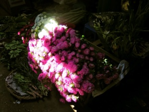Flowers caught in the sunlight
