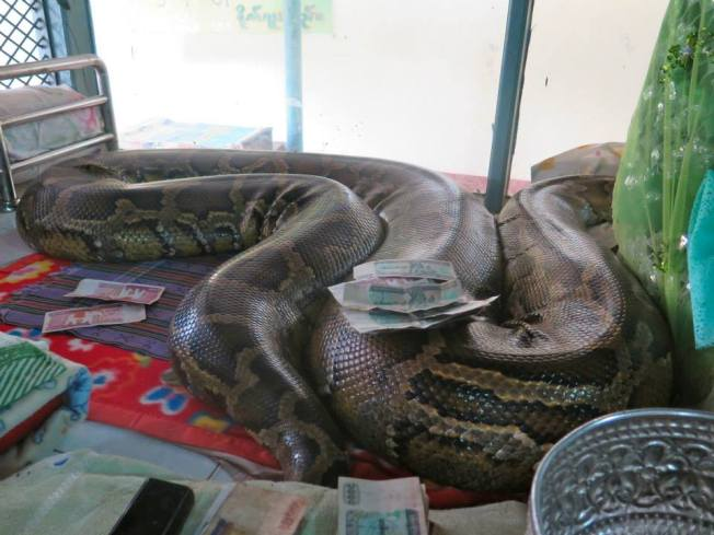 he famous python, said to be 123 years old and revered as a nat reincarnation. Happily sleepy
