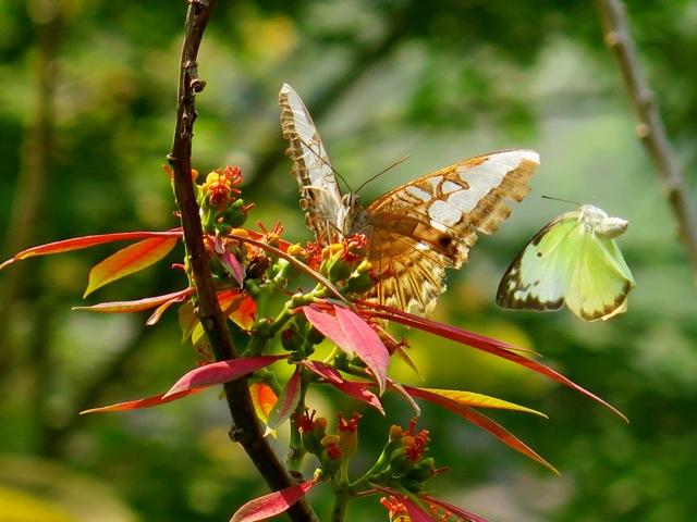LP butterflies 1