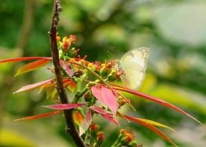 LP butterflies 2