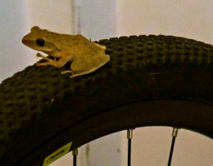 frog on a bike