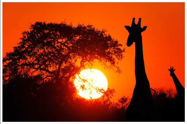 Photo courtesy of http://www.africam.com/wildlife/african_sunsets_wildlife_and_landscape_photography