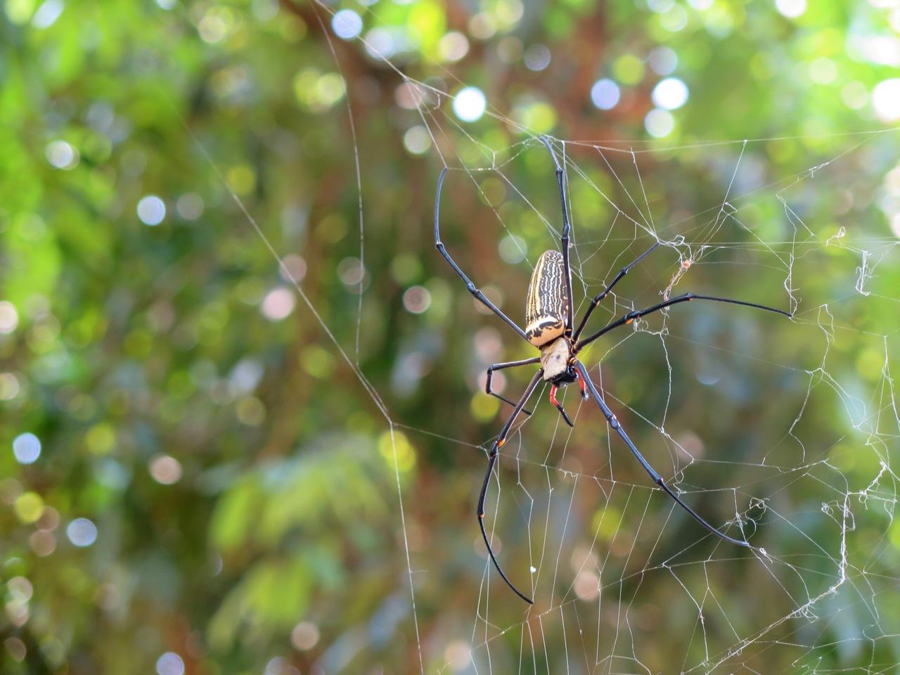 Hillside Spider