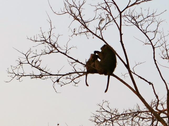 Hippo bird-day 29