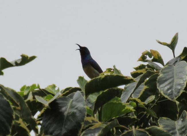 sunbird 3
